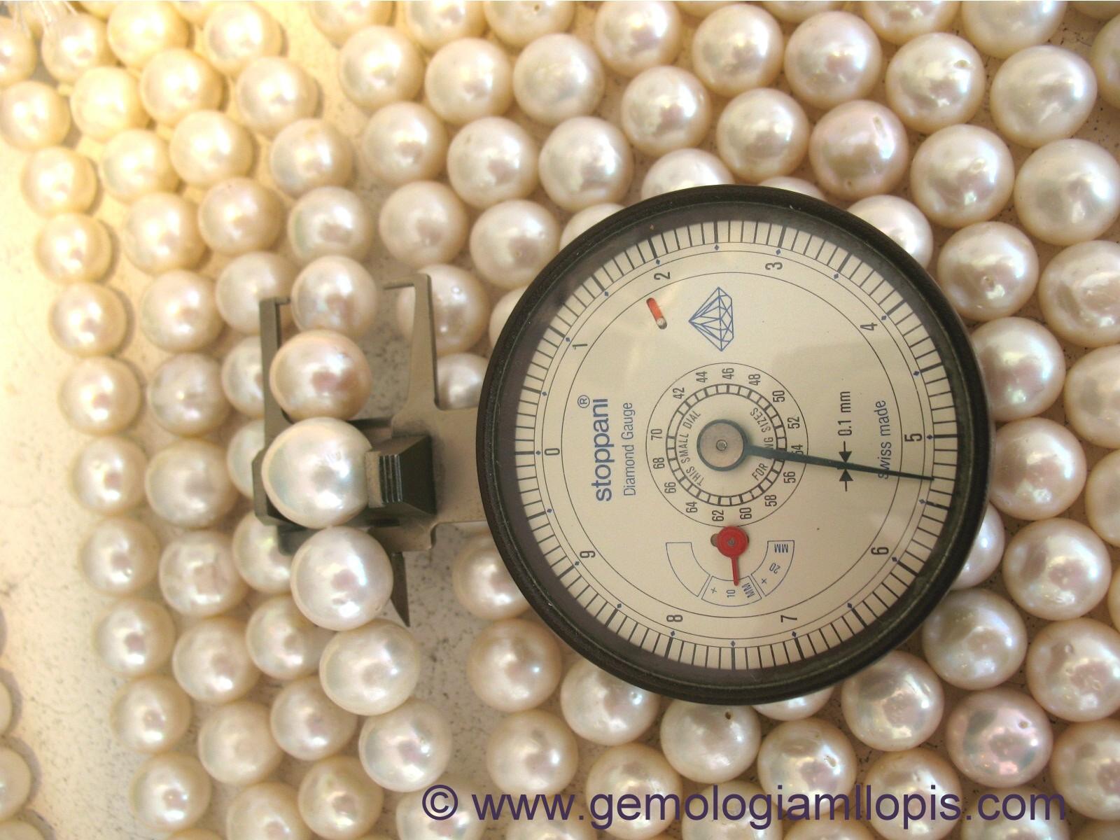 perla cultivada de agua dulce redonda con 14,50 mm de diámetro