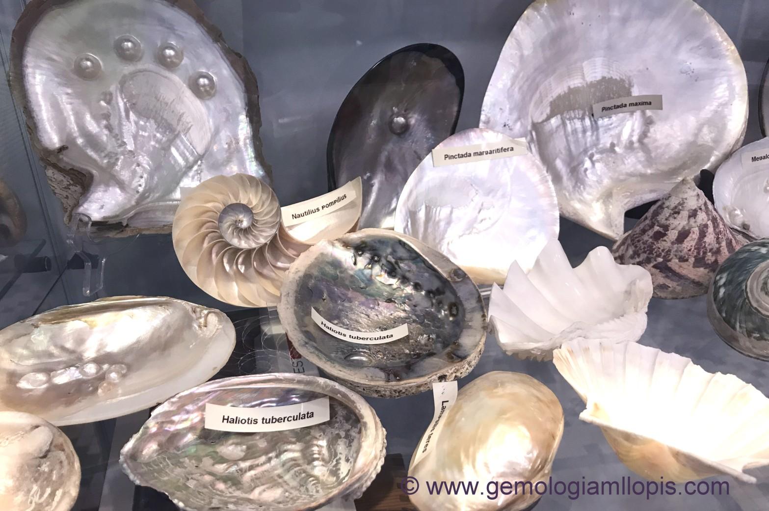 coleccion de conchas